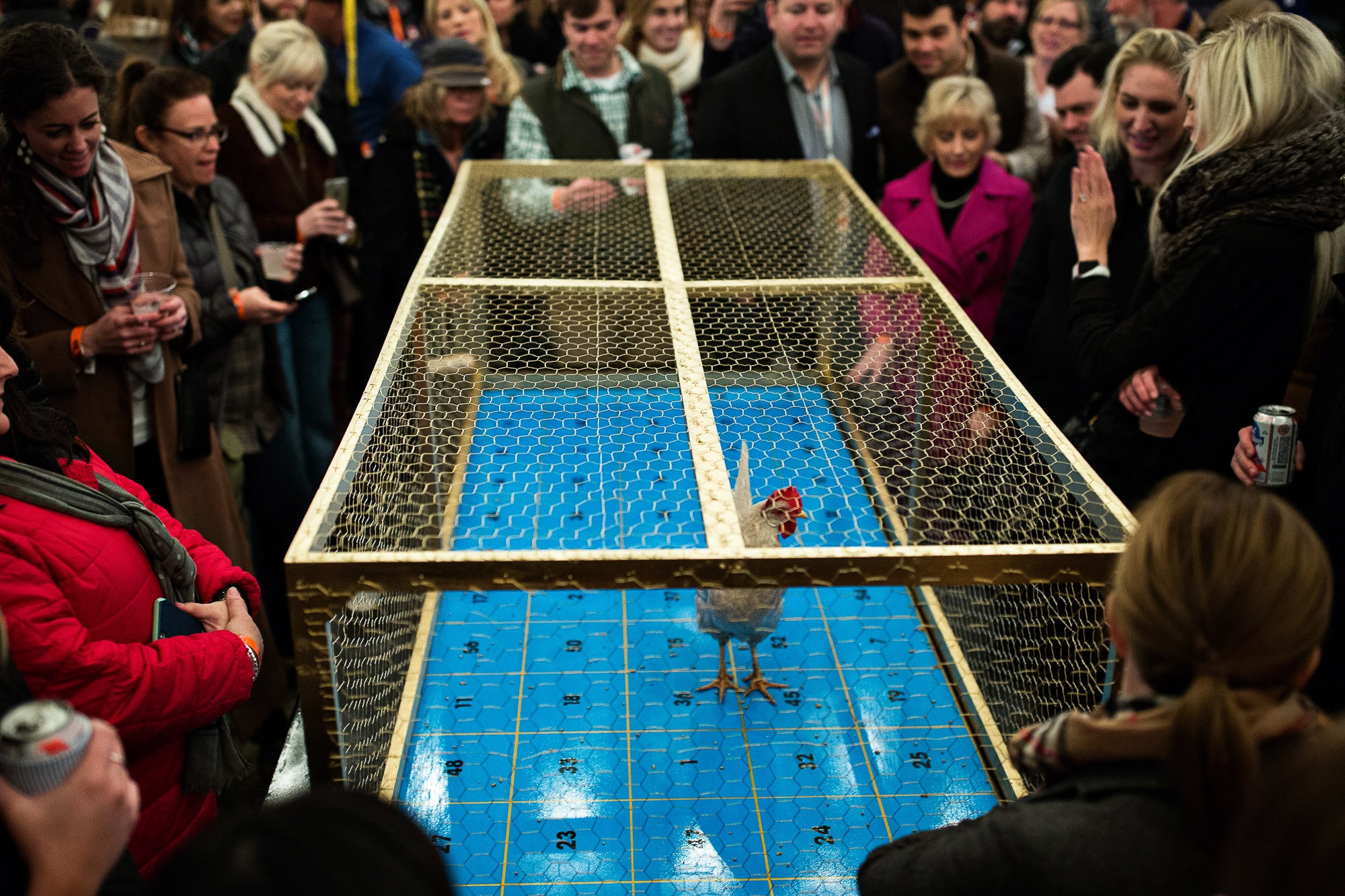 Chicken Sh#t Bingo.jpg